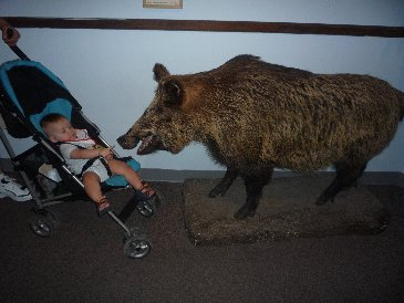 Alex and Wild Boar.JPG