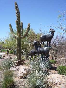 Desert Big Horn Sheep.jpg